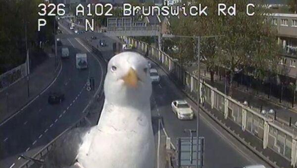 Seagull Poses in Front of Traffic Camera in London - Sputnik International