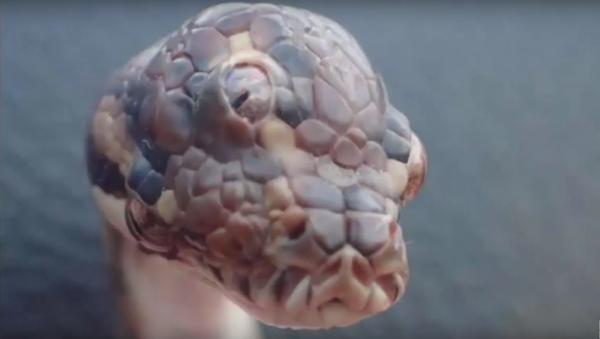 Bizarre Three eyed Snake Discovered in Australia - Sputnik International