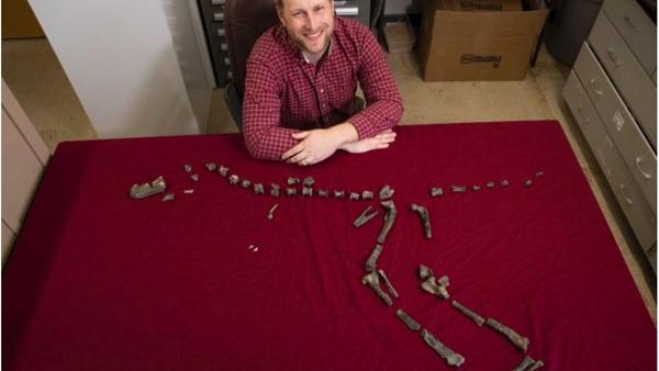 Sterling Nesbitt sits next to the fossilized bones of Suskityrannus hazelae - Sputnik International