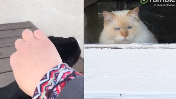 Petty Petting: Cat Peeved as Stray Shown Affection - Sputnik International