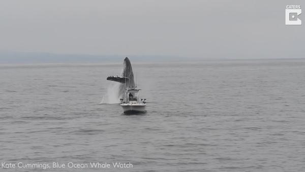 Photographer Catches Humpback Breaching Too Close For Comfort - Sputnik International