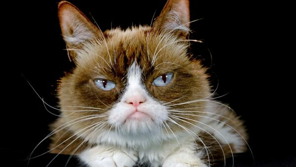 """This Dec. 1, 2015 file photo shows Grumpy Cat posing for a photo in Los Angeles. Grumpy Cat is joining the cast of the Broadway musical """"Cats"""" on Friday, Sept. 30, 2016 - Sputnik International"""