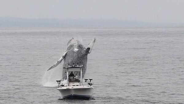 Whale Breach Close To Boat - Sputnik International