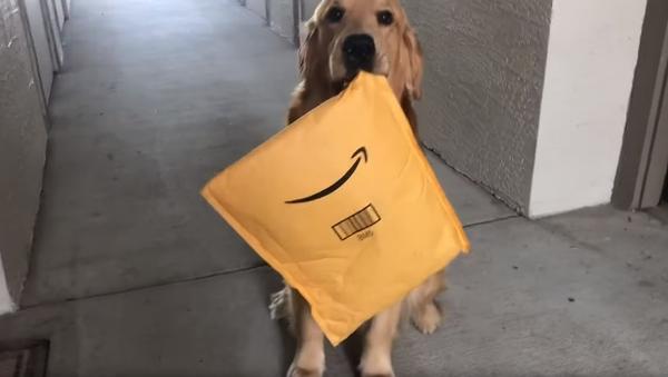 Carrier Canine: Service Dog Happily Retrieves Owner's Package - Sputnik International