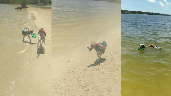 Two-Legged Dog Doesn't Let Defect Hinder His Playtime - Sputnik International