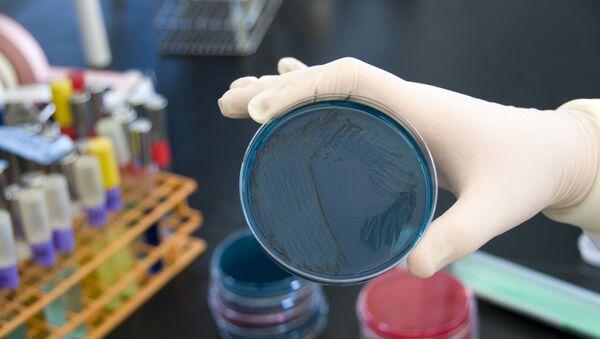 An FDA microbiologist tests seafood samples for the presence of Salmonella. - Sputnik International