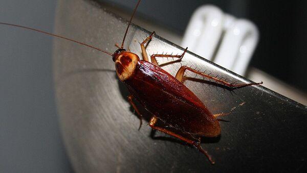 Cockroach  - Sputnik International