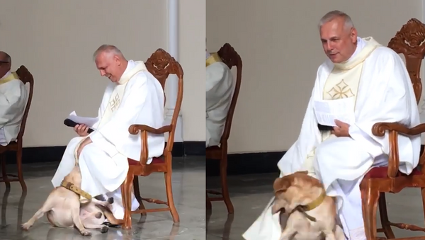Playful Pooch Welcomed With Open Arms During Mass in Brazil - Sputnik International