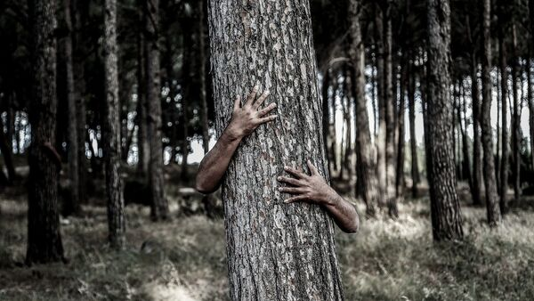 Man hiding behind a tree - Sputnik International