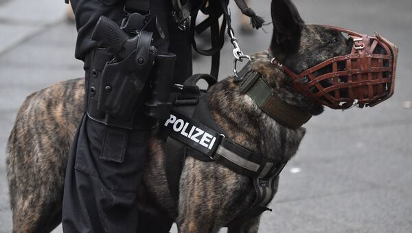 A dog of the German police k9 Unit (File) - Sputnik International