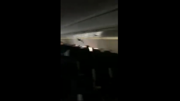 Bat Sneaks Onto Spirit Airlines Flight - Sputnik International