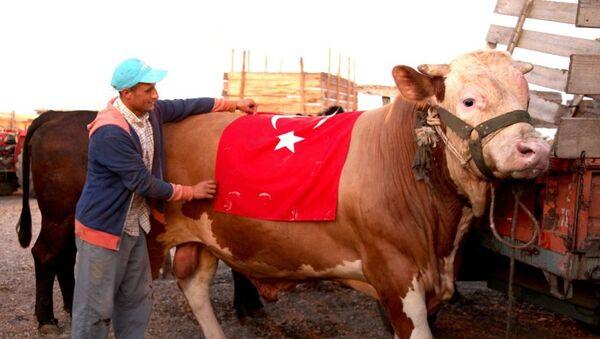 Sacrificial Ox Named After S-400 in Turkey - Sputnik International