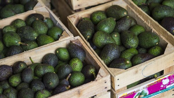 Crates of avocados from Michoacan available for sale at a market in Mexico City, Tuesday, Aug. 9, 2016. High avocado prices have fueled deforestation in Michoacan, where farmers cut down pines to clear the way for more avocado trees - Sputnik International