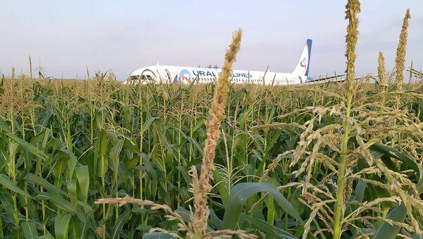 Russia A321 Plane Accident - Sputnik International