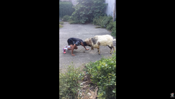 Filipino Man, Goat Engage in Impromptu Fighting Match - Sputnik International