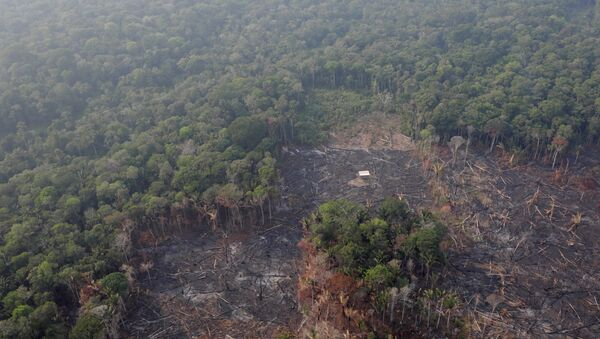 An aerial view of a deforested plot of the Amazon near Humaita, Amazonas State, Brazil August 22, 2019 - Sputnik International