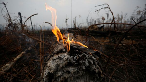 A tract of Amazon jungle is seen after a fire in Boca do Acre, Amazonas state, Brazil August 24, 2019.  - Sputnik International