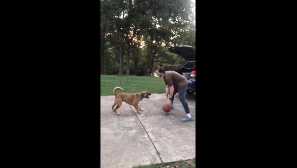 Arkansas Man Schools Dog With Basketball Game - Sputnik International