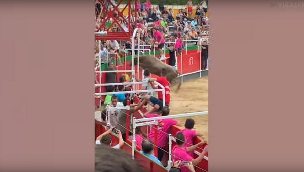 Massive Bull Causes Mayhem After Jumping Into Crowds - Sputnik International