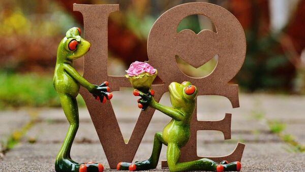 Wedding of frogs - Sputnik International
