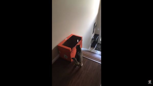 Cat Finds Creative, Innovative Way to Slide Down Stairs - Sputnik International