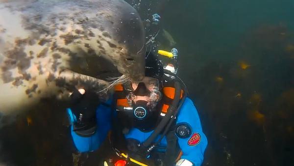 Cuddly Seal Accidentally Knocks Off Diver's Mouthpiece - Sputnik International