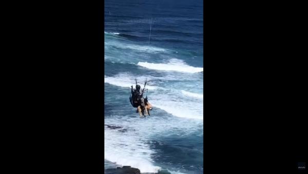 Aussie Dog Goes Paragliding Across Sydney Beach - Sputnik International