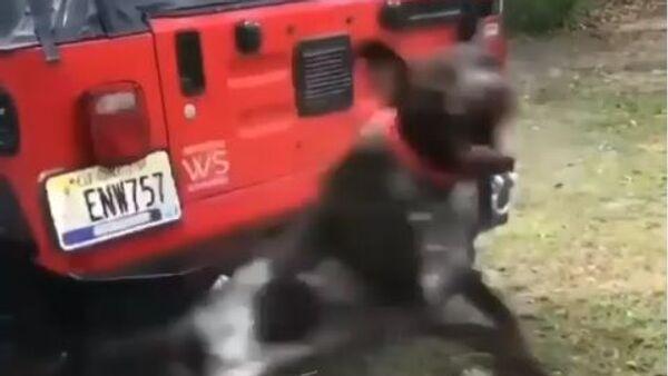 Levitating dog preventing owner from washing his car - Sputnik International