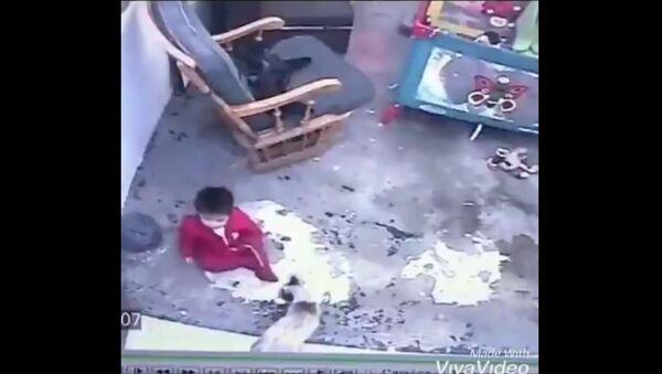 A screenshot from a video. A cat saves a toddler. - Sputnik International