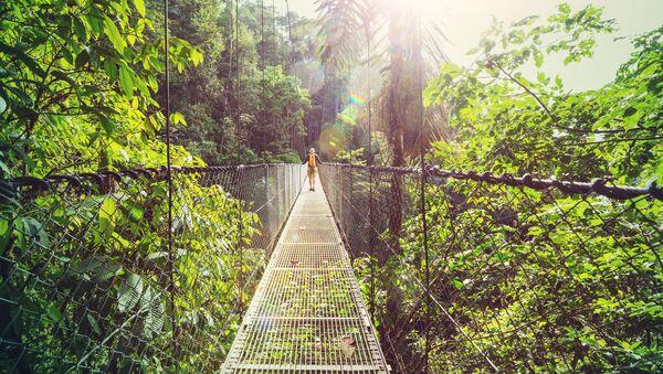 Hiking in green tropical jungle, Costa Rica, Central America. - Sputnik International
