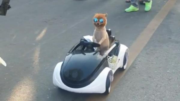 Toy Dog 'Drives' Car Through Thai Market - Sputnik International