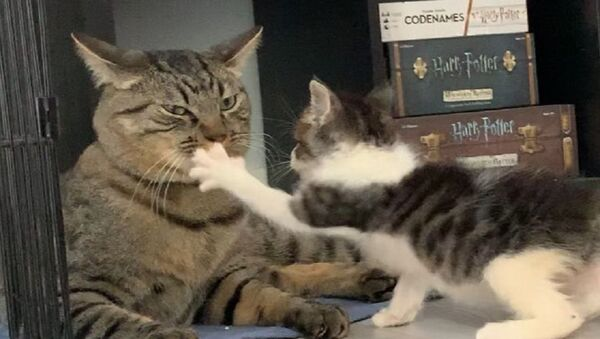 Cats - Sputnik International