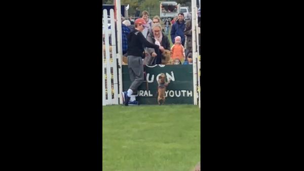 Toy Dog Wins Over Crowd Despite Failed Stint at High-Jump Contest - Sputnik International