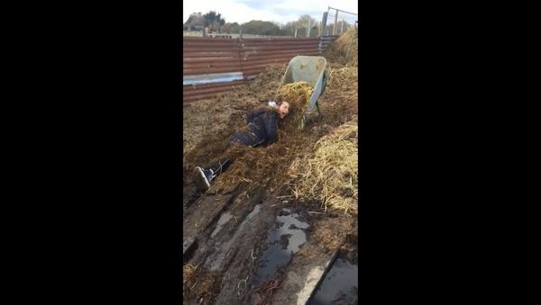 UK Farm Helper Ends Up Covered in Manure After Losing Footing - Sputnik International
