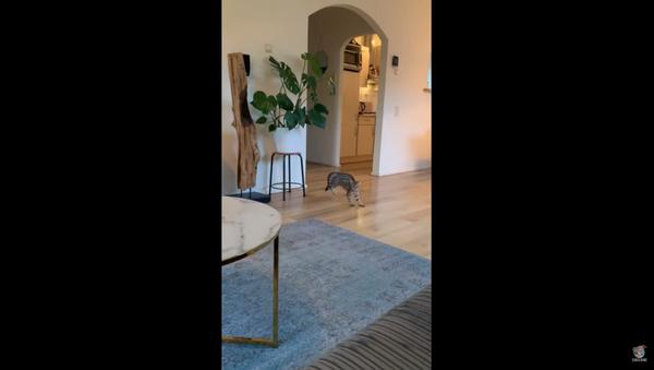 Dutch Kitty Slips, Slides on Recently Mopped Floor - Sputnik International
