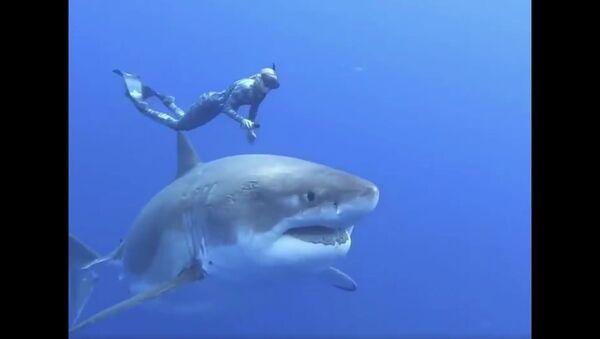20ft Great White Shark - Sputnik International