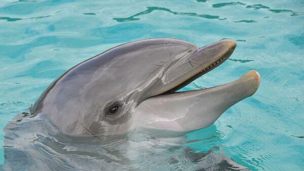 Dolphin  - Sputnik International