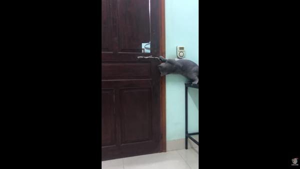 Vietnamese Cat Overcomes Locked Door, Makes Great Escape - Sputnik International