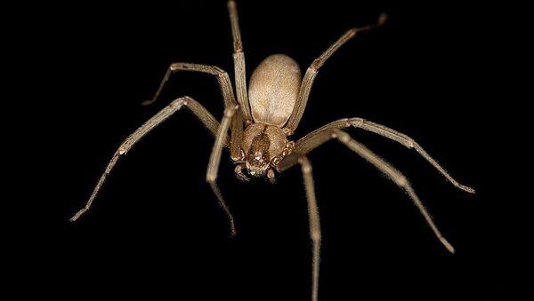 Spider  - Sputnik International