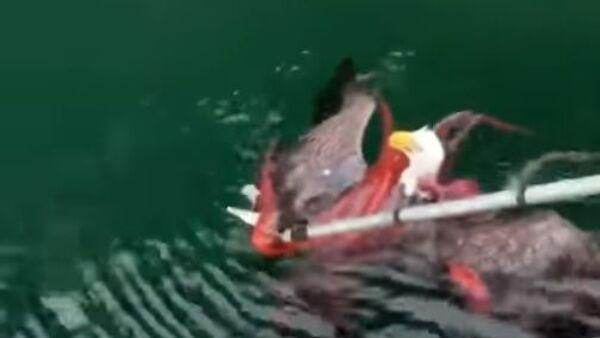 Saving an eagle from an octopus - Sputnik International