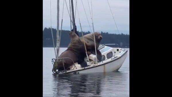 Boat - Sputnik International