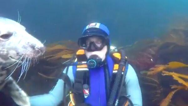 Diver and Seal - Sputnik International