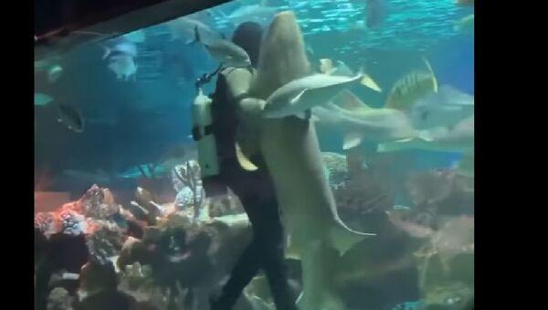 Scuba Diver Dances With Shark - Sputnik International