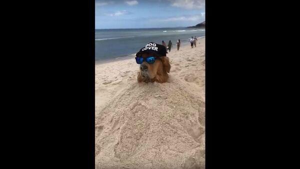 Beachy Brazilian Golden Retriever Chills In Sand  - Sputnik International