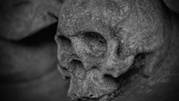 Skull. - Sputnik International
