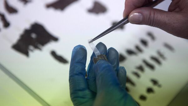 FILE -  In this May 10, 2013 file photo, an Israel Antiquities Authority employee works on fragments of the Dead Sea Scrolls in Jerusalem - Sputnik International