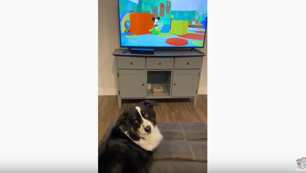 TV Time: Pooch Insists On Watching Favorite Shows - Sputnik International