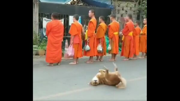 A dog with the monks at a temple in Laos - Sputnik International