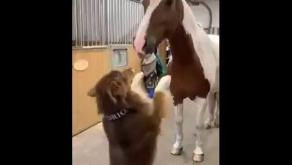 Animals  Humor - Sputnik International