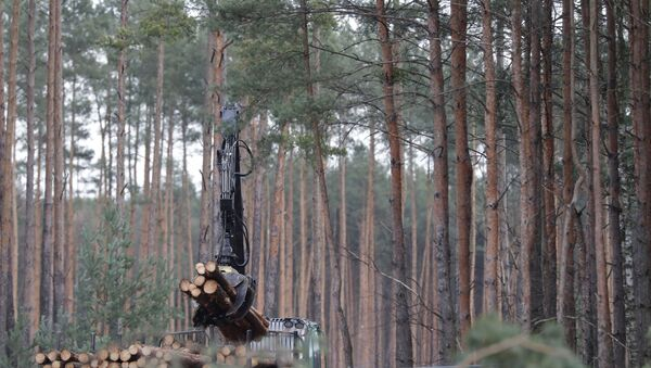 Pine logs are piled up on the future site where US electric car giant Tesla is set to build its new car factory, in Gruenheide near Berlin - Sputnik International